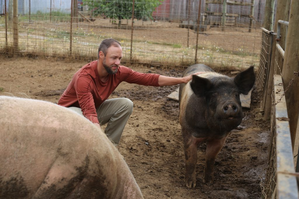 A resident of Blanchet Farm tends to one of the pigs kept for therapy and to reduce food waste.
