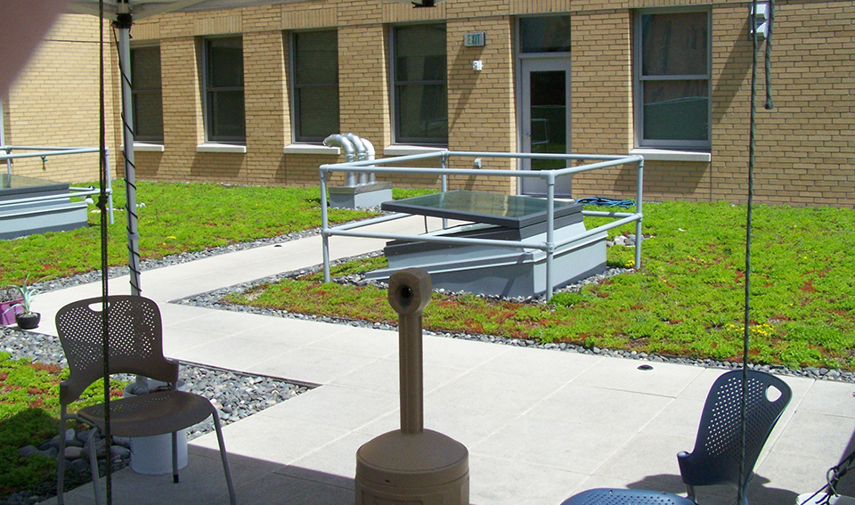 Green roof for rainwater collection at Blanchet House.